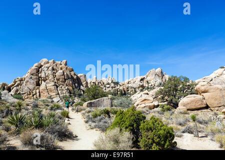 Wanderer im Hidden Valley, einem ehemaligen Vieh Rustler Versteck, Joshua Tree National Park, San Bernardino County, - Stockfoto