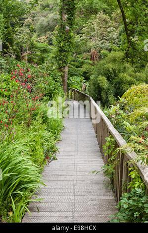 Die Lost Gardens of Heligan, Cornwall, UK. Eine Fußgängerbrücke im Dschungel - Stockfoto