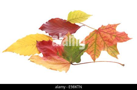 Stillleben mit verschiedenen bunten Herbstlaub auf weißem Hintergrund - Stockfoto