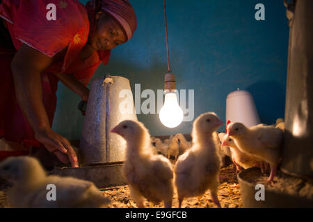 Hühnerfarm in Arusha, Tansania, Ostafrika. - Stockfoto