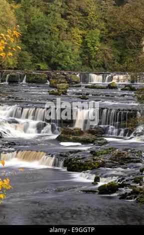 Upper Aysgarth Falls auf dem Fluß Ure im Herbst, Aysgarth, Yorkshire Dales National Park, North Yorkshire, England, - Stockfoto