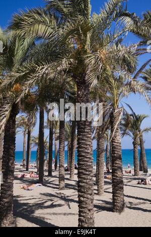 Palmen am Strand, Costa del Sol, Torremolinos, Málaga Provinz, Andalusien, Spanien - Stockfoto