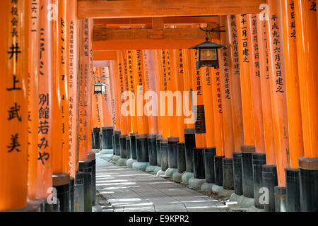 Torii-Tore im Fushimi Inari-Schrein in Kyōto, Japan. - Stockfoto