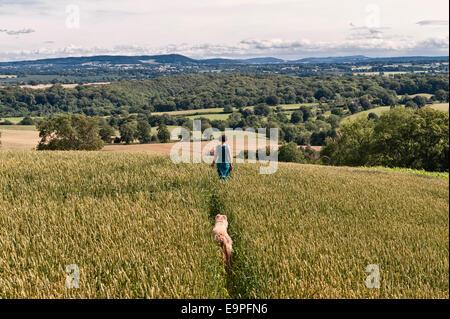 Eine Frau, die zu ihrem Hund auf einem Pfad durch ein Feld von Weizen entlang der Mortimer Trail auf Wapley Hill, - Stockfoto