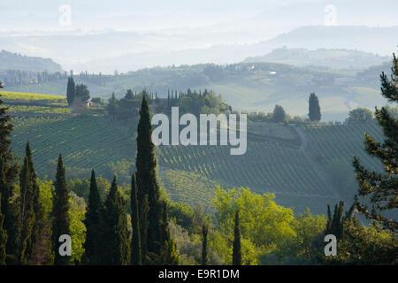 San Gimignano, Toskana, Italien. Blick über typische rebenbestockten Hänge im Morgengrauen. - Stockfoto