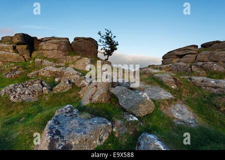 Einsamer Weißdorn Baum auf scharfe Tor. Dartmoor-Nationalpark. Devon. VEREINIGTES KÖNIGREICH. - Stockfoto