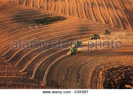 Weizenernte westlich von Regina; Saskatchewan, Kanada - Stockfoto