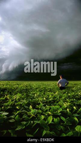 Landwirtschaft - ein Bauer stehen in seiner Mitte Wachstumsfeld Soja beobachtet, wie ein heftiger Sturm nähert / - Stockfoto