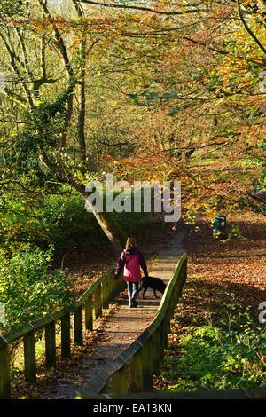 Gainford, County Durham, Großbritannien. 5. November 2014. UK-Wetter.  Eine Frau genießt die Herbst Farben, während - Stockfoto