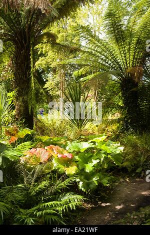 Dschungel-Wachstum in die Lost Gardens of Heligan Cornwall UK - Stockfoto