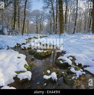 Seichten Bach durch Schnee bedeckt Wald in Südwales. - Stockfoto