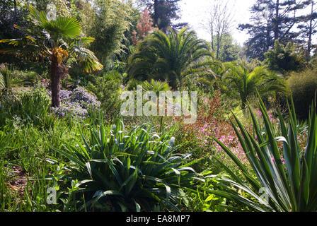 Dschungel-Garten in die Lost Gardens of Heligan in der Nähe von Mevagissey Restormel Mid Cornwall South West England - Stockfoto