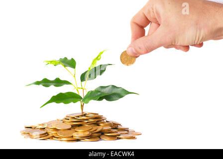 Hand und grüne Pflanze, die von den Münzen. Geld Finanzkonzept. - Stockfoto