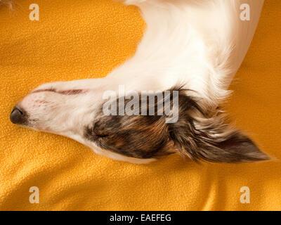 Hund im Bett schlafen