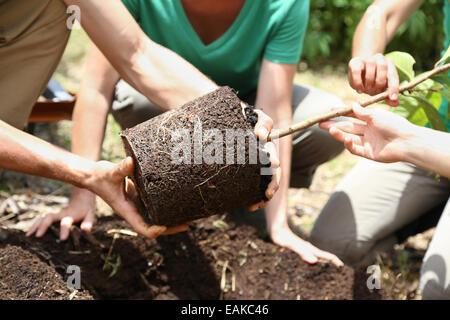 Menschen Pflanzen Baum im Garten - Stockfoto