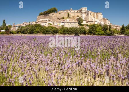 Lavendelfelder grignan provence frankreich europa for Lavendelfelder provence
