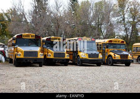 Reihe von gelben Schulbusse geparkt auf einem Hof im ländlichen Saskatchewan Kanada Stockfoto