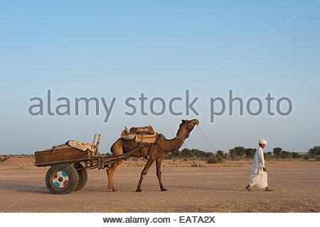 Ein Rajasthani-Mann geht vor seinem Kamel und Wagen in der Wüste. - Stockfoto