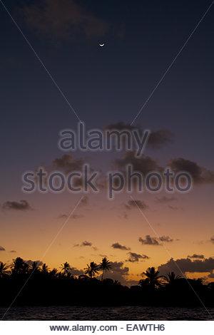 Ein Splitter eines sichelförmigen Mondes befindet sich oberhalb des Atolls Palmen nach Sonnenuntergang auf Ahe-Atoll. - Stockfoto