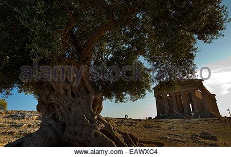 Dorischer Tempel der Concordia in Agrigento - Stockfoto