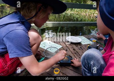 Kleine Jungen verwenden eine spezielle Lupe, um aquatische Teichleben auf einer Schulreise zu beobachten. - Stockfoto