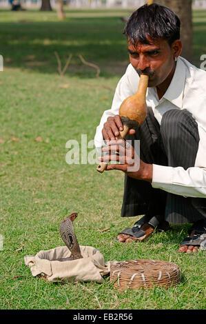 Snake Charmer mit indischen Kobra, asiatischen Cobra oder Spectacled Cobra (Naja Naja) in einem Korb, New Delhi, - Stockfoto