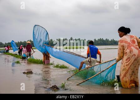 Bauern von Karawang Angeln mit Fischernetzen, Alternative zu essen, wenn ihre Reisfelder während Monsun überschwemmt. - Stockfoto