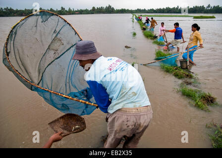 Bauern in Westjava Angeln mit Fischernetzen, Alternative zu essen, wenn ihre Reisfelder während Monsun überschwemmt. - Stockfoto