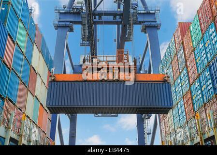 Shore-Kran hebt Container während des Betriebs der Ladung im Hafen - Stockfoto