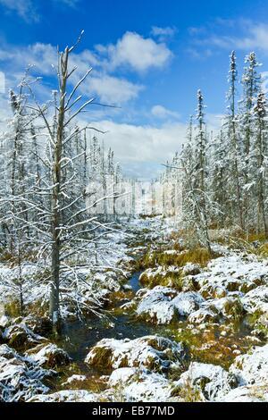 Ersten Schneefall mit goldenen Tamarack Bäumen und Pinienwälder entlang der Autobahn 2 im Norden von Minnesota, - Stockfoto