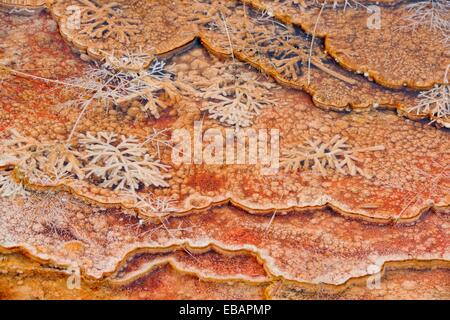 Cyanobakterien und Thermophyllic Algen inkrustieren winzige Terrassen am Grassy Frühling, Mammoth Hot Springs, Wyoming, - Stockfoto