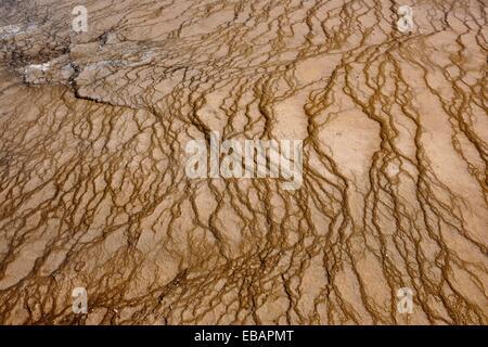 Thermophyllic Algen Kolonien in der Nähe von Grand Bildobjekte Frühling im Midway Geyser Basin Yellowstone NP Wyoming - Stockfoto