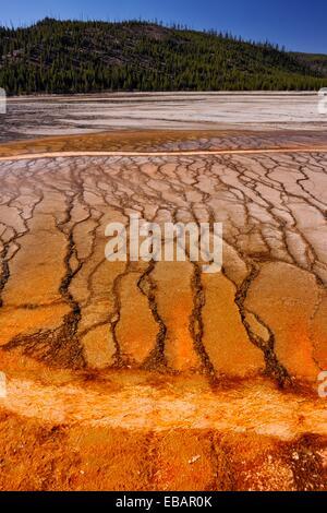 Thermophyllic Algen Kolonien in der Nähe von Grand Bildobjekte Frühling im Midway Geyser Basin, Yellowstone NP, - Stockfoto