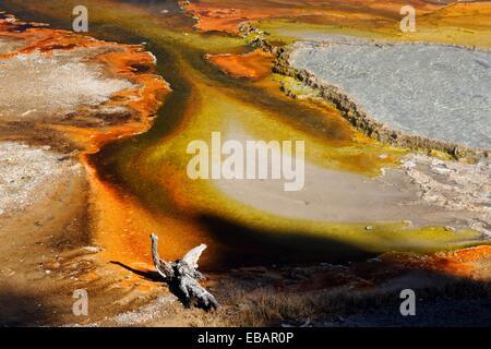 Lower Geyser Basin, Firehole Lake Drive - Firehole Spring, Yellowstone NP, Wyoming, USA. - Stockfoto