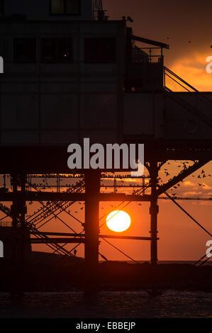 Aberystwyth Wales UK herein Freitag, 28. November 2014 am Ende eines feinen trockenen und sonnigen Tag, Stare zum - Stockfoto