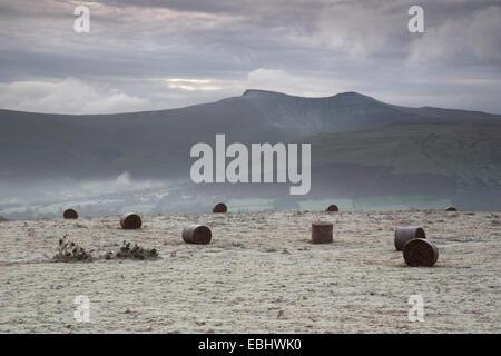 Ballen von Adlerfarn bedeckt in Frost, im Vordergrund, die Gipfel des Pen Y Fan und Mais Du der Brecon Beacons in - Stockfoto