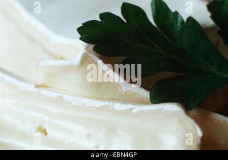 Penicillium Camemberti auf Käse - Stockfoto