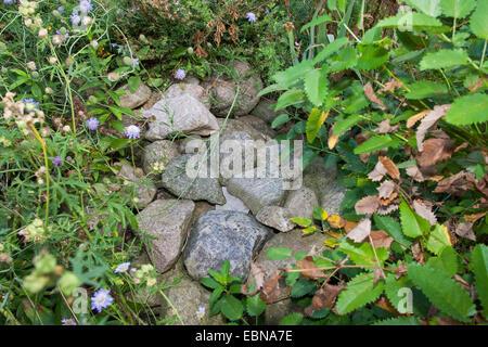 Natursteine auf einem steinhaufen als unterschlupf lebensraum f r tiere im garten deutschland - Natursteine fur garten ...
