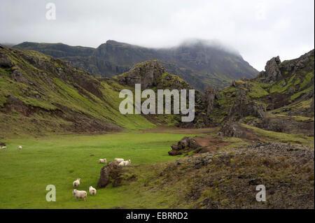 Schafe auf der Weide in einer Berglandschaft, Island - Stockfoto