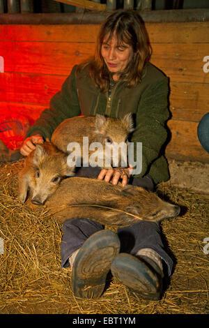 Wildschwein, Schwein, Wildschwein (Sus Scrofa), Frau kuscheln mit Jungtieren im Stall, Deutschland - Stockfoto