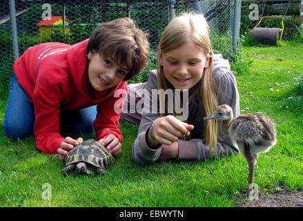 größere Rhea (Rhea Americana), Freundinnen liegen in den Rasen mit Schildkröte - Stockfoto