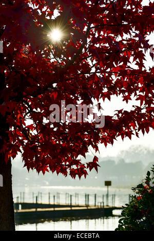 Italien, Sonne, die durch rote Laub der Ahornbaum mit See Pier im unscharfen Hintergrund - Stockfoto