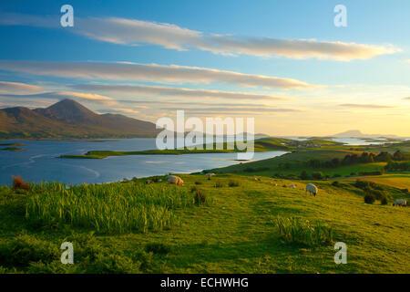 Schafe weiden unter Croagh Patrick am Ufer der Clew Bay, County Mayo, Irland. - Stockfoto
