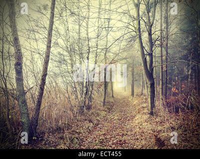 Geheimnisvollen herbstlichen Wald an einem nebligen Tag.