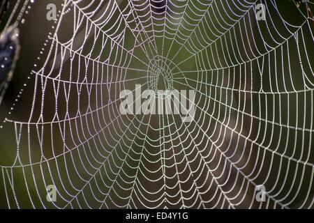 Klettergerüst Spinnennetz : Red klettergerüst seilen gegen blauen himmel bewölkt in einem park