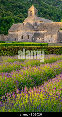 12. Jahrhundert Zisterzienserkloster Senanque mit Sommer Lavendel Felder, in der Nähe von Gordes, Provence, Südfrankreich - Stockfoto