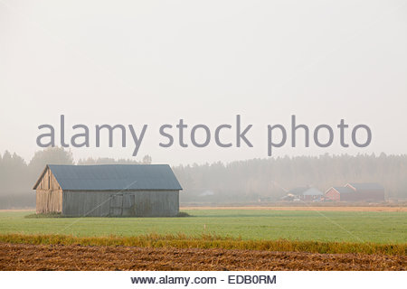 Misty Herbstmorgen in Finnland - Stockfoto