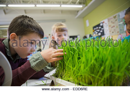 Grundschüler Sprossen im Labor untersuchen - Stockfoto