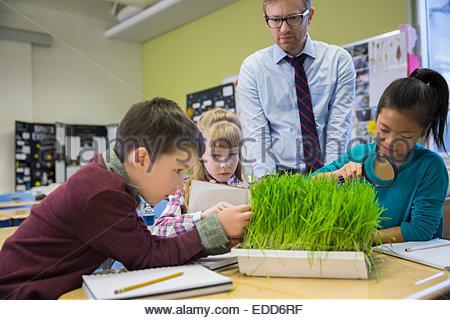 Lehrer und Grundschüler Sprossen im Labor untersuchen - Stockfoto