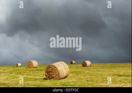 Rundballen Stroh in einen Acker, Exmoor, Großbritannien - Stockfoto